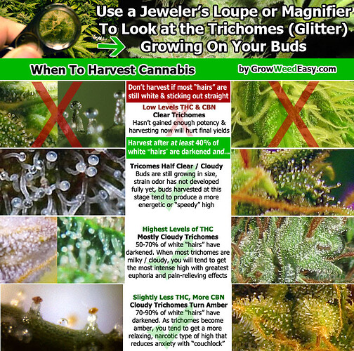 when-to-harvest-cannabis-diagram